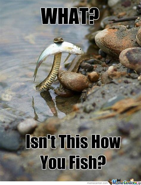 Fish Memes - fishing memes best collection of funny fishing pictures