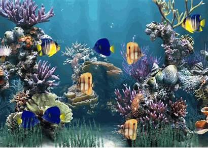 Animated Aquarium Screenshots Desktop Windows Themes