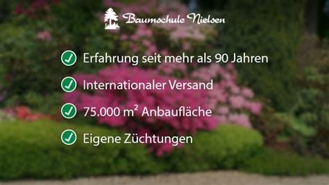 Japanischer Garten Wiesbaden by Gartenpflanzen Wiesbaden Baumschule Nielsen