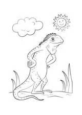 Coloring Iguana Pages Lizards Cartoon Lizard sketch template