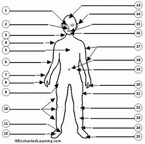 English Exercises  Body Parts