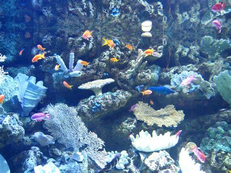 pacific aquarium aquarium of the pacific maven s photoblog