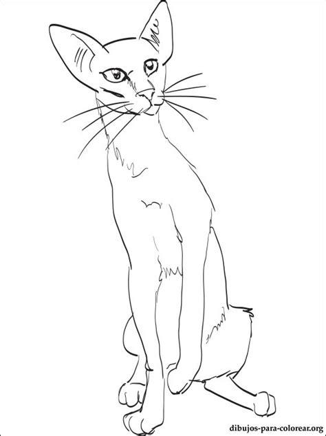 dibujo de gato oriental  pintar dibujos  colorear
