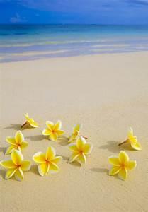 Plumeria beach   Hawaiian Scenery   Pinterest   Beach ...