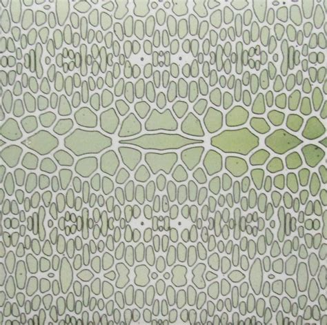 daltile ceramic wall tile green lizard texture 4x4 wall