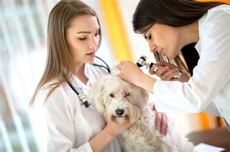understanding business insurance  veterinarians