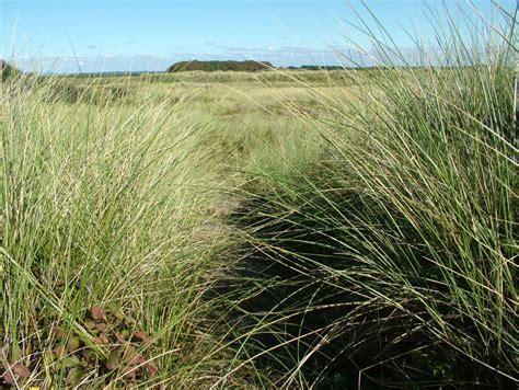 sand dune plants field studies council