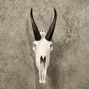 Mountain Goat European Skull  10984