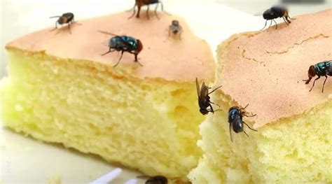 Video Why You Should Never Eat Food After Flies Have Sat