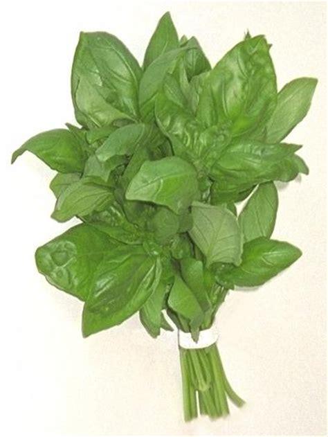 cuisine castres sorbet chartreuse et basilic è molto goloso