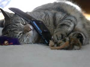 phone cat cat phone christopher bowns flickr