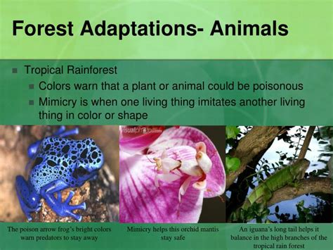 Habitats and Adaptations PowerPoint Presentation