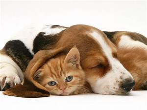 There Might Be An Answer To The Great Dogs Vs  Cats Debate