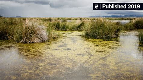 How Did Plants Conquer Land? These Humble Algae Hold Clues ...