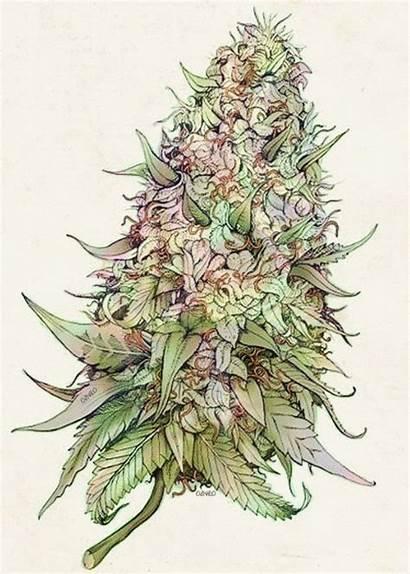 Weed Marijuana Pot Bud Cannabis Trippy Plant