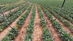 Drip Irrigation T-L Pivot Irrigation Systems | T-L Irrigation