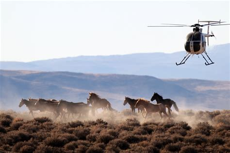 wild horses horse slaughterhouses deaths protected sent mexican angeles times