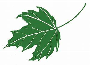 Green Maple Leaf Clipart - Clipart Suggest