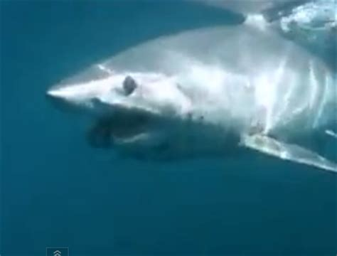 Mako Boats New Zealand by World Sharks News New Zealand Mako Shark Attacks