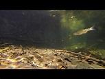Roggia Visconti underwater - Maddalena - Somma Lombardo ...
