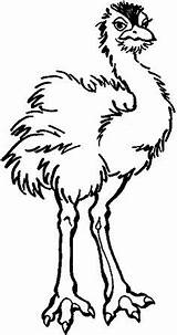 Coloring Emu Pages Colouring Adult Bird sketch template