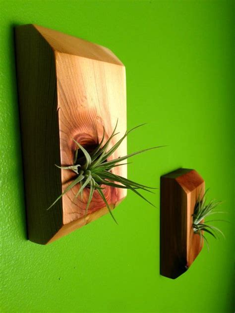 exceptionally beautiful air plant holder ideas