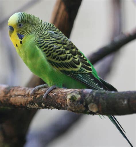 Parakeet Communication System