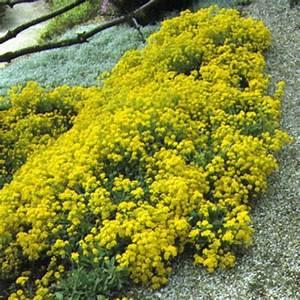 Couvre Sol Vivace : plantes vivaces ombre images ~ Premium-room.com Idées de Décoration