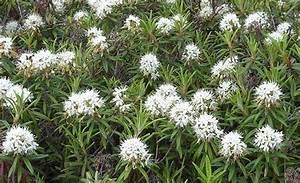 Plants The Tundra