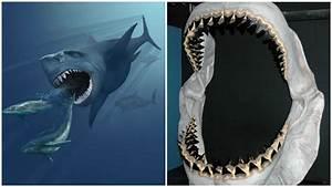 Could Megalodon Shark Still Be Alive? - Look4ward