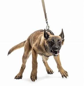 leash aggression victoria stilwell positively With aggressive dog behaviour