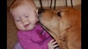 Cute Cats and Huge Dogs kissing Babies Compilation 2014 ...