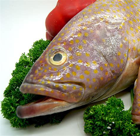 cod rock grouper fresh honeycomb durack
