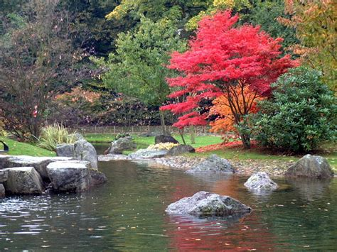 Le Jardin Japonais De Hasselt  Chrysanthèmes 5