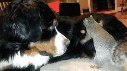 Dog Squirrel Nut Mountain Bernese Fur Bury