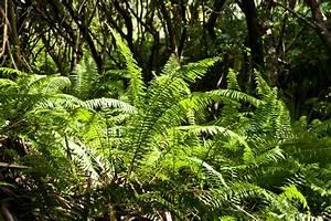 Farn Im Garten : farnwald bei les cascades ~ Orissabook.com Haus und Dekorationen