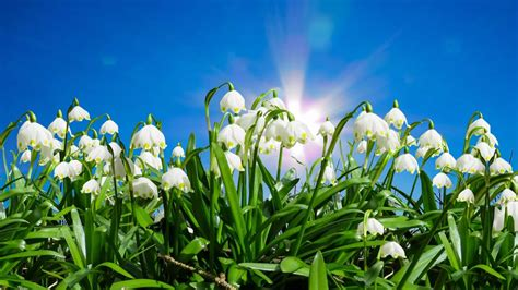 Mit Faszientraining Fit In Den Frühling