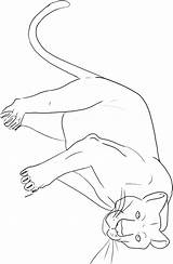 Panther Coloring Pages Animal Printable Sheet Florida Print Animals Colouring Panthers Sheets Animalstown Drawings Drawing Information Results Powered sketch template