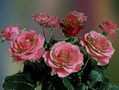 Roses Fleurs Rose Gifs Scintillantes Jolies Flowers