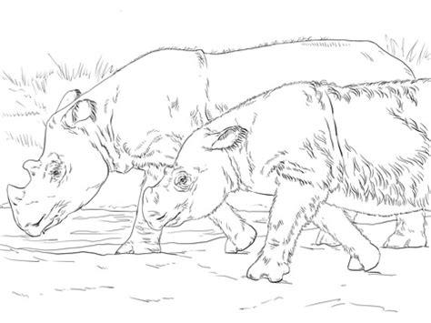 sumatran rhinos coloring page supercoloringcom