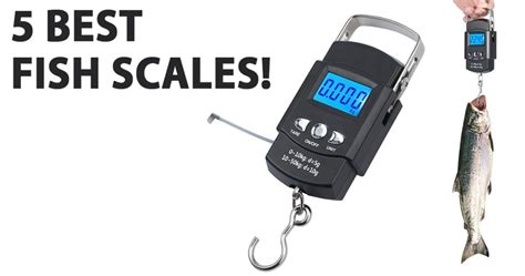 fish scale reviewed hook fishing scales