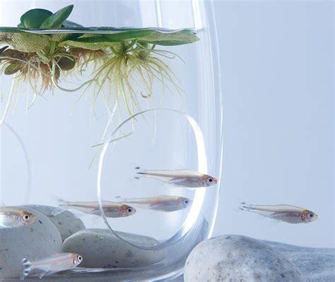 aquarium design 224 flore imprim 233 en 3d par haruka misawa