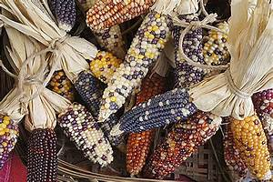 Study Reveals Troubling Loss In Mexico U0026 39 S Maize Genetic Diversity
