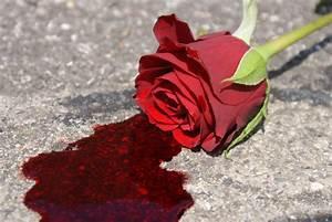 Bleeding Rose Picture, Bleeding Rose Image