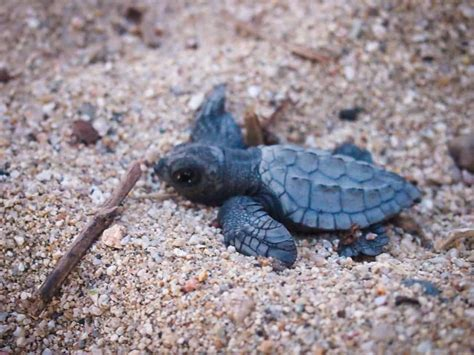 He caught the mosquito, he caught the flea. The Friday Photo #185 - Go little turtle go