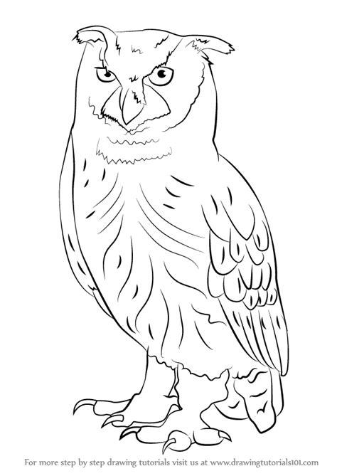 learn   draw  eurasian eagle owl owls step