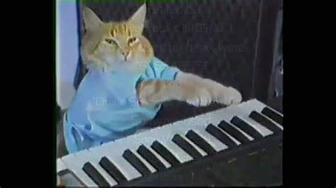 keyboard cat plays   cat failing  gate