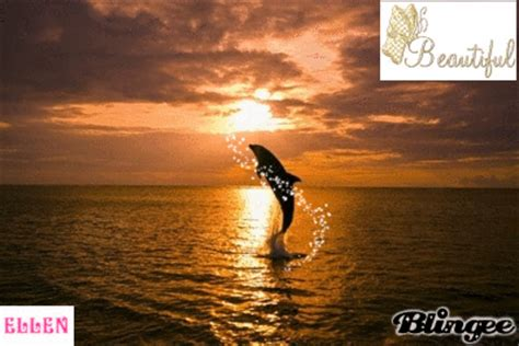 sunset dolphin picture  blingeecom