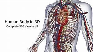 360 Anatomy