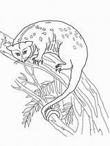 Possum Coloring Tree sketch template